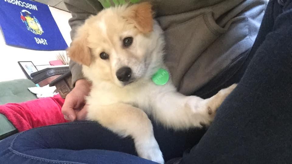 Jeden z adoptowanych szczeniaków Snowbelle
