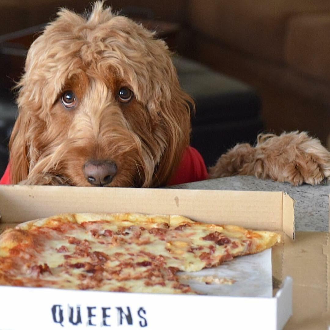 Pies Murphy