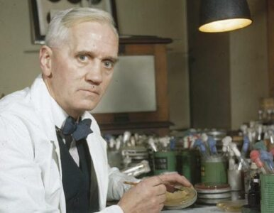 Stworzył penicylinę, odmienił medycynę. 60 lat od śmierci Fleminga