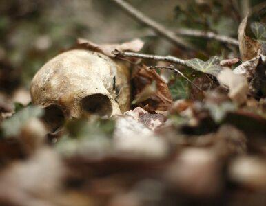 Przed 14 laty czaszki katyńskie pochowano z honorami. Dzisiaj pojawiają...