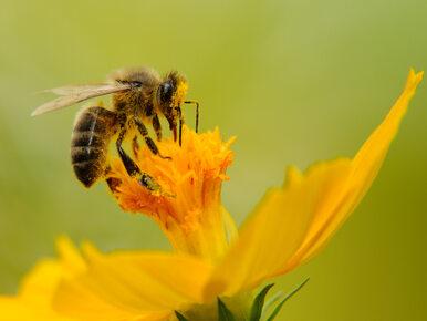 Żywiec stawia na pszczelarstwo. Powstaje Pasieka Miejska