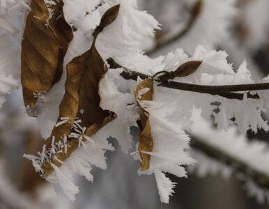 Prognoza na piątek: Będzie zimno i nieprzyjemnie