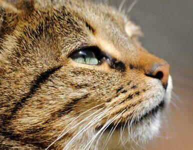 Dolny Śląsk: włożyli kota do pralki, potem wyrzucili na śmietnik