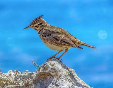 Ptaki też mają wakacje. Jak je spędzają?