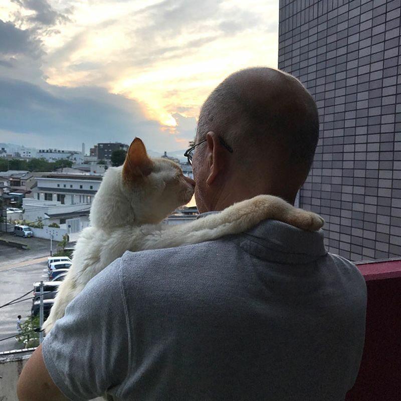 Ostatnie zdjęcie z ukochanym kotem. Właściciel wyniósł go na balkon - jego ulubione miejsce