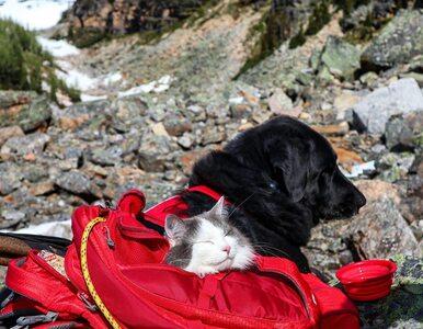 Kot podróżnik podbija Instagrama. Chodzi nawet w wysokie góry!