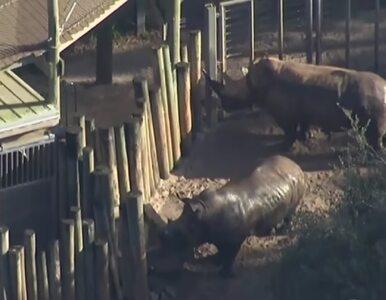 2-latka zaatakowana przez nosorożca w zoo. Trafiła do szpitala