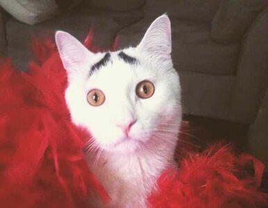 Zdziwiony kot nowym hitem Internetu