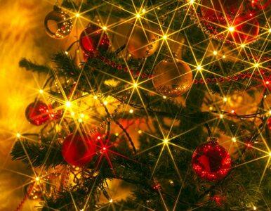 Polacy już nie chcą świąt przy choince, ale pod palmą