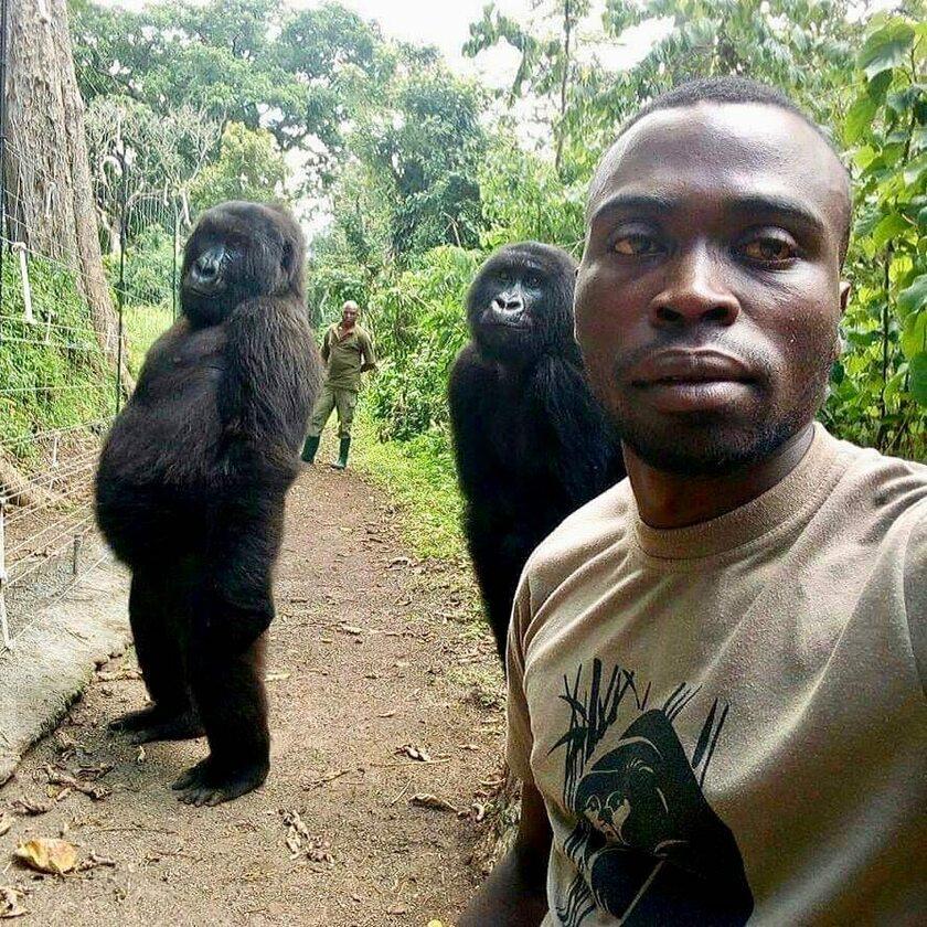 Mężczyzna zrobił sobie selfie z dwoma gorylami