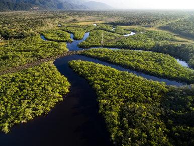 Peru. Parlament przyjął ustawę ws. budowy dróg w Amazonii. Ma powstać...