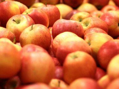 Polskie jabłka trafią do Chin i krajów arabskich