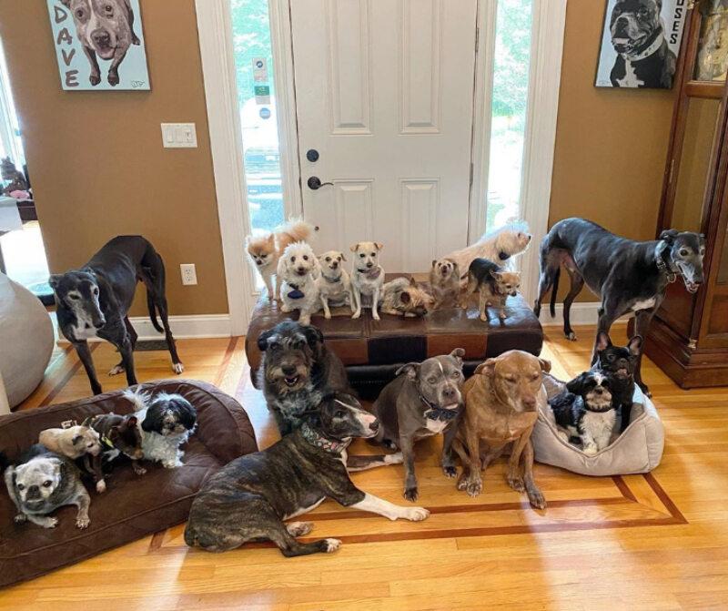 Psy, którymi opiekuje się Chris i Mariesa