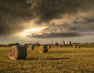 Piątek z burzami na północnym wschodzie. W kolejnych dniach wrócą upały