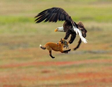 To była wyjątkowo zuchwała kradzież. Fotograf przyrody uchwycił...