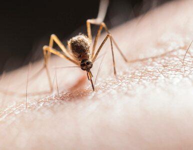 Denerwują cię komary? A ile właściwie o nich wiesz? Sprawdź się,...