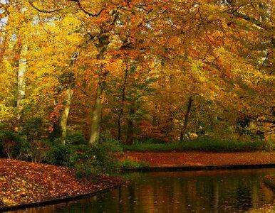 Meteorolodzy ostrzegają: Po upalnym lecie czeka nas... bardzo ciepła jesień
