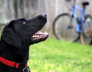 Pies i rower w Kolejach Mazowieckich bez biletu