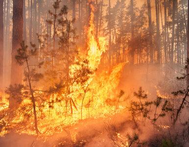 Pożar na dawnym poligonie wojskowym. Spłonęło prawie 50 ha wrzosowisk