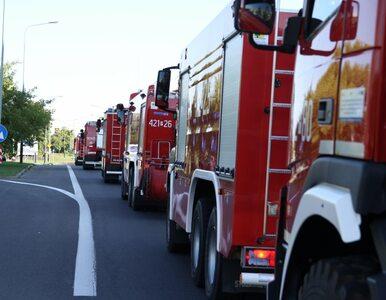 """""""Dziękuję wszystkim polskim strażakom"""". Entuzjazm w Szwecji po..."""