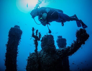 Podwodny świat na wyciągnięcie ręki. Weź płetwy i odwiedź wyjątkowe muzeum
