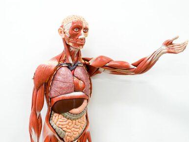 Przełomowe odkrycie naukowców. Ponad połowa naszego organizmu nie jest...