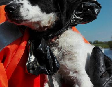 Strażacy wyłowili psa z wylewiska. Miał worek na głowie i wrośniętą obrożę