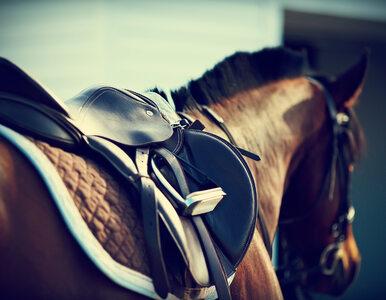 Naukowcy udowodnili, że konie mogą porozumiewać się z ludźmi