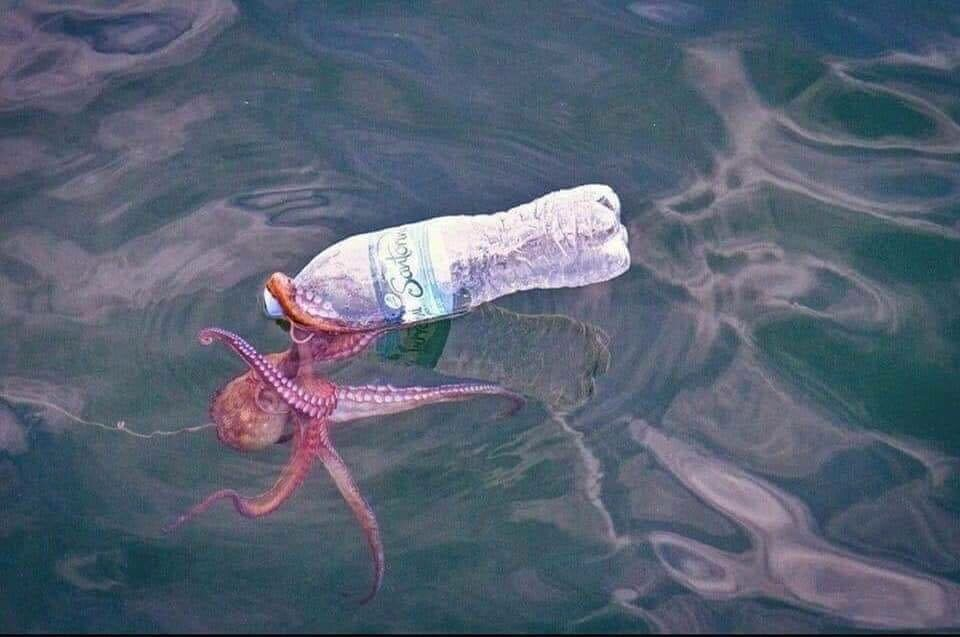Śmieci z oceanów i zwierzęta