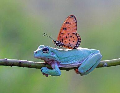 W przyrodzie wszystko jest możliwe. Fotograf uchwycił coś niezwykłego